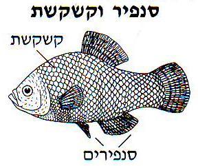 Kóser hal: pikkelyek és uszonyok