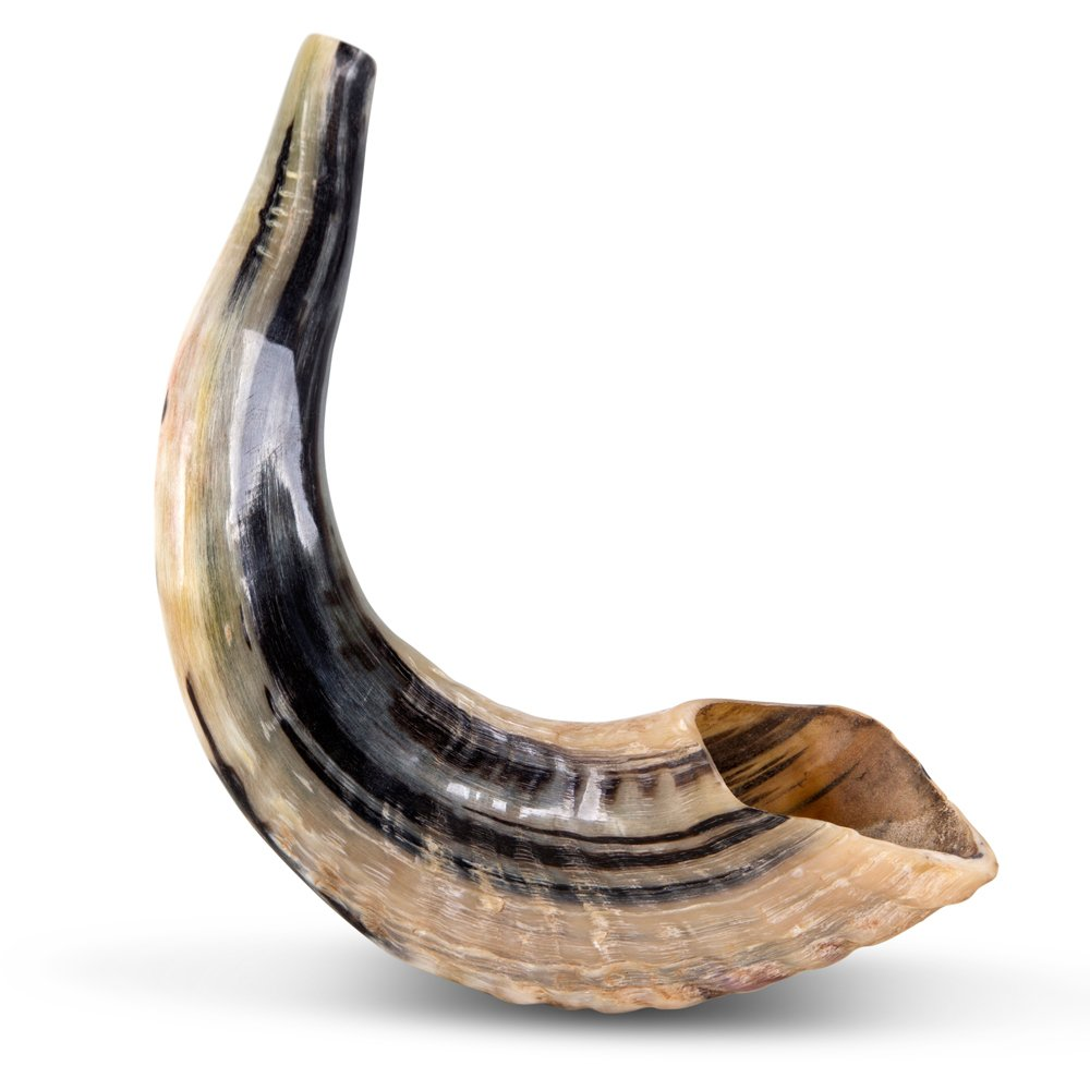 classical-rams-horn-shofar-small-natural-sm-30-35-n_large