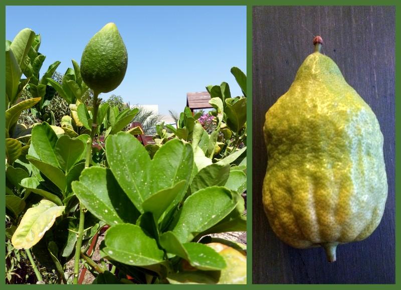 Kis szukoti növényhatározó