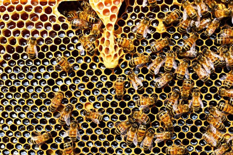 Legyen édes évünk: méz a kóser konyhában
