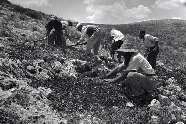 A szervezet, amely 260 millió fát telepített Izraelben